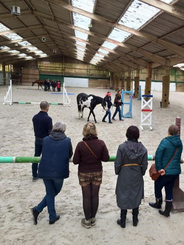 equicoaching lille nord cheval coach manège