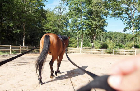equicoaching lille nord cheval coach